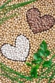 8438178-lentils-soybeans-beans-with-herbs--pulse-concept